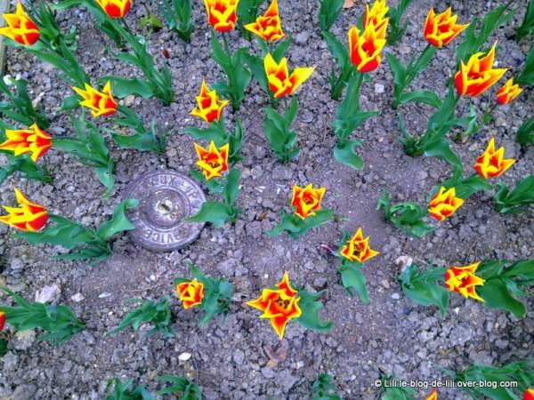 tulipes-parc-floral.JPG