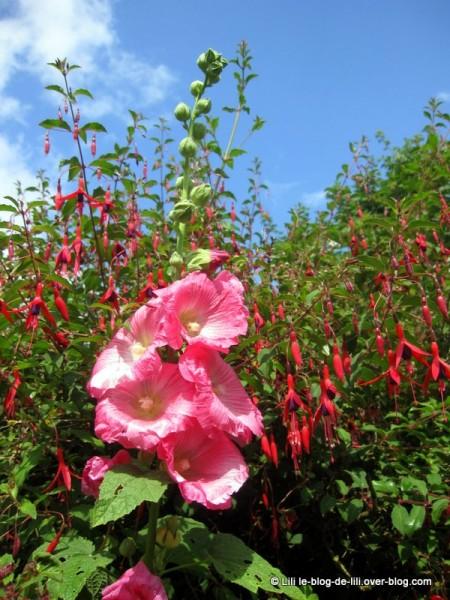 Binic-fleurs.JPG