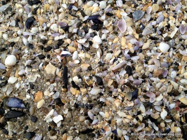 Projet-52-2012-semaine-30-coquillages-bretons-le-blog-de-Li.JPG