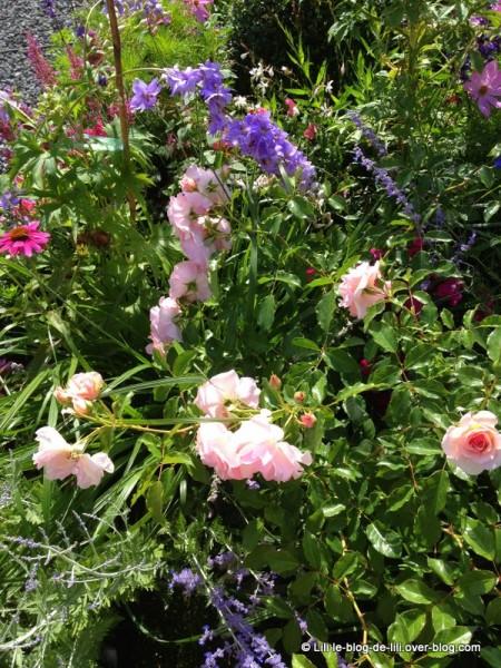 Metz-8-jardin-ephemere.JPG