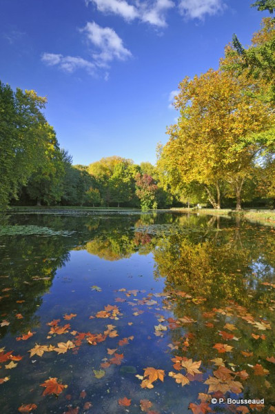 Parc-Cheverny-c-P.-Bousseaud.jpg