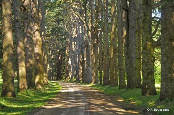 promenade-insolite-Cheverny-cP.-Bousseaud.jpg
