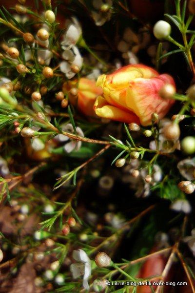 fleurs-tulipe-2013.JPG