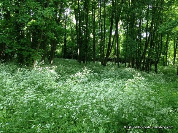 Juste avant d'entrer dans l'arboretum : déjà un peu de nature