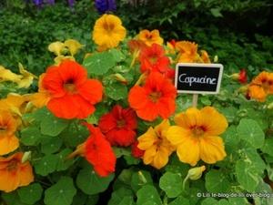 L'Art du jardin : les roses et tomates cerises poussent au Grand Palais