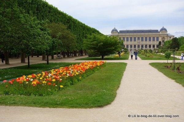 Promenade au jardin des plantes ♥ Des roses et des couleurs