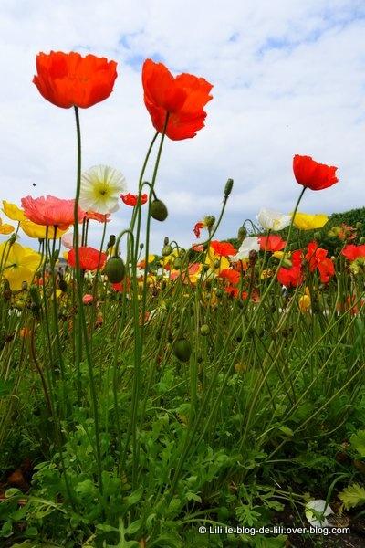 Promenade au jardin des plantes des roses et des for Au jardin des couleurs