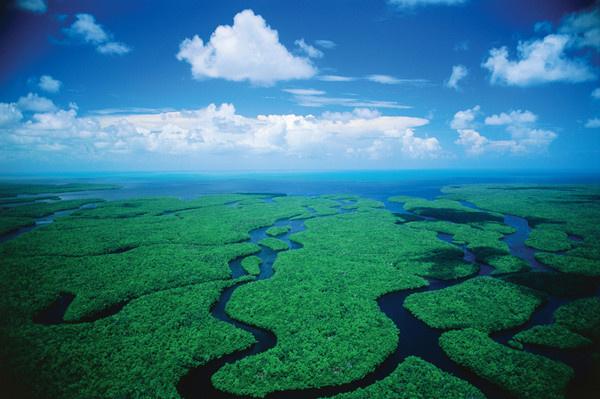 Everglades - Miami - Floride