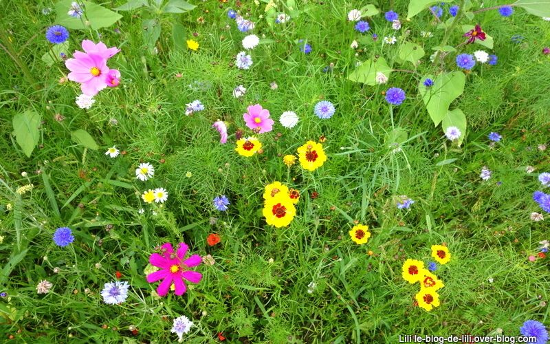 Jachère fleurie dans les jardins de Brocéliande en Bretagne