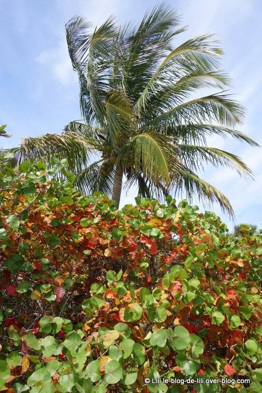 Key Biscayne : une île paisible au sud de Miami