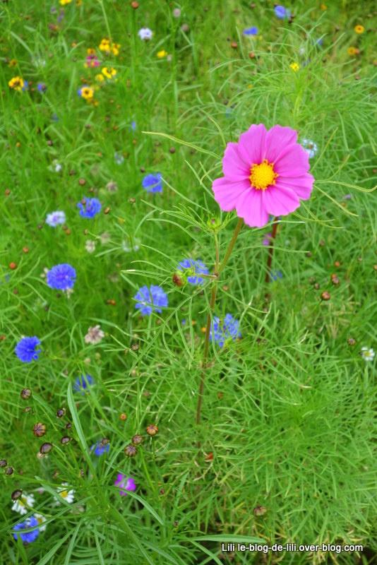 Un après-midi aux jardins de Brocéliande : des fleurs et de l'aventure