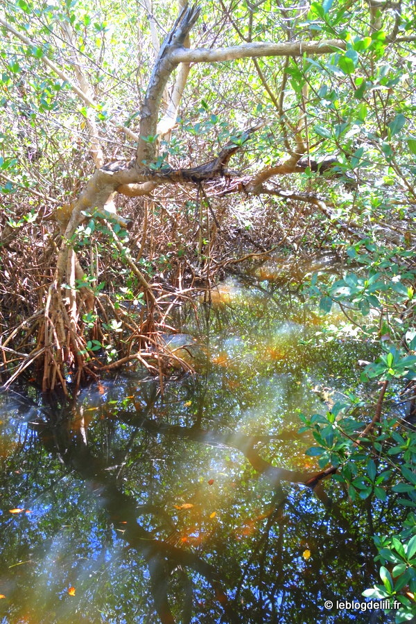 [Voyage en Floride] Fort Myers et Sanibel Island, l'île aux coquillages