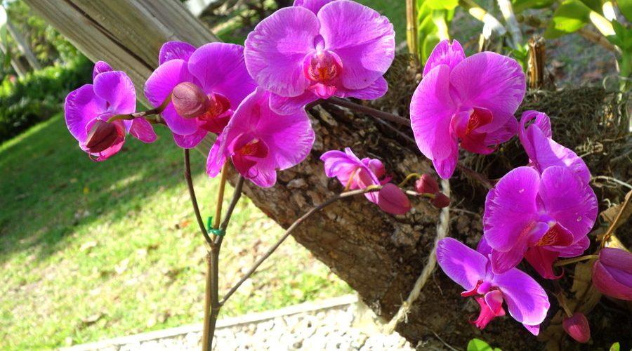 Les orchidées du jardin de la maison de Ford et d'Edison, en Floride