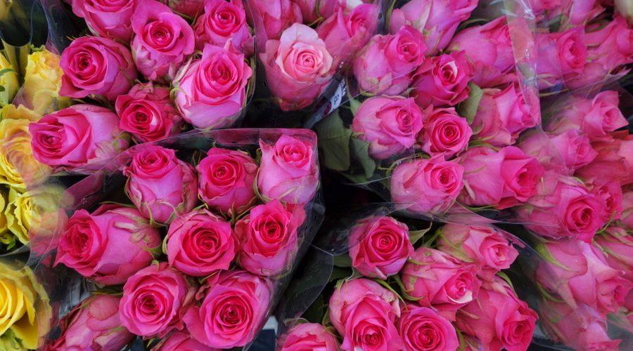 ob_4f73f6_columbia-road-flower-market-londres-17
