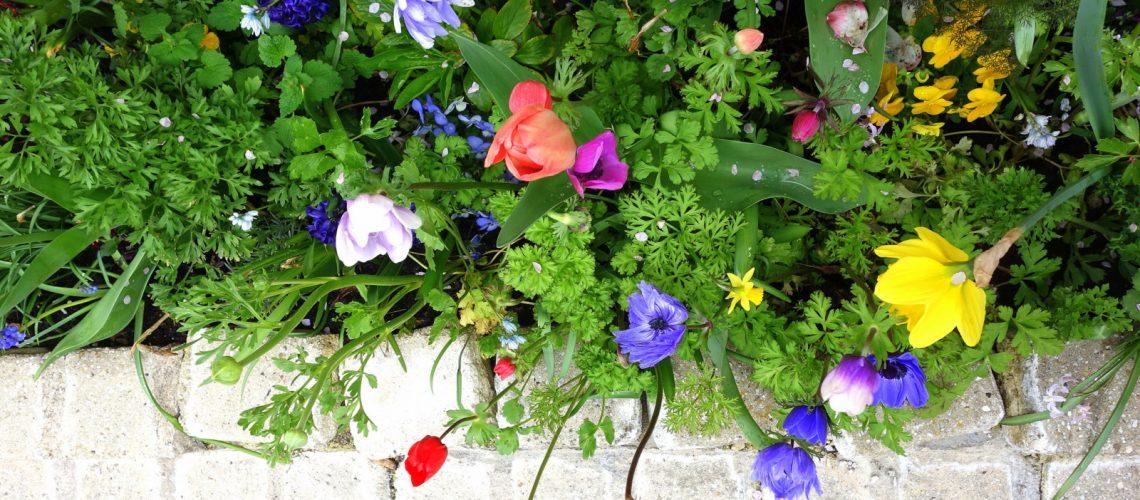 Les fleurs d'Auvers-sur-Oise, la ville dans laquelle Van Gogh a vécu ses derniers jours