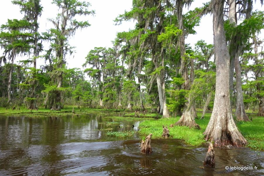 Au Sud de la Louisiane, à la découverte des bayous autour de Houma