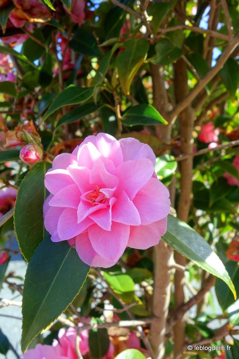 Terra botanica, les jardins extraordinaires d'Angers