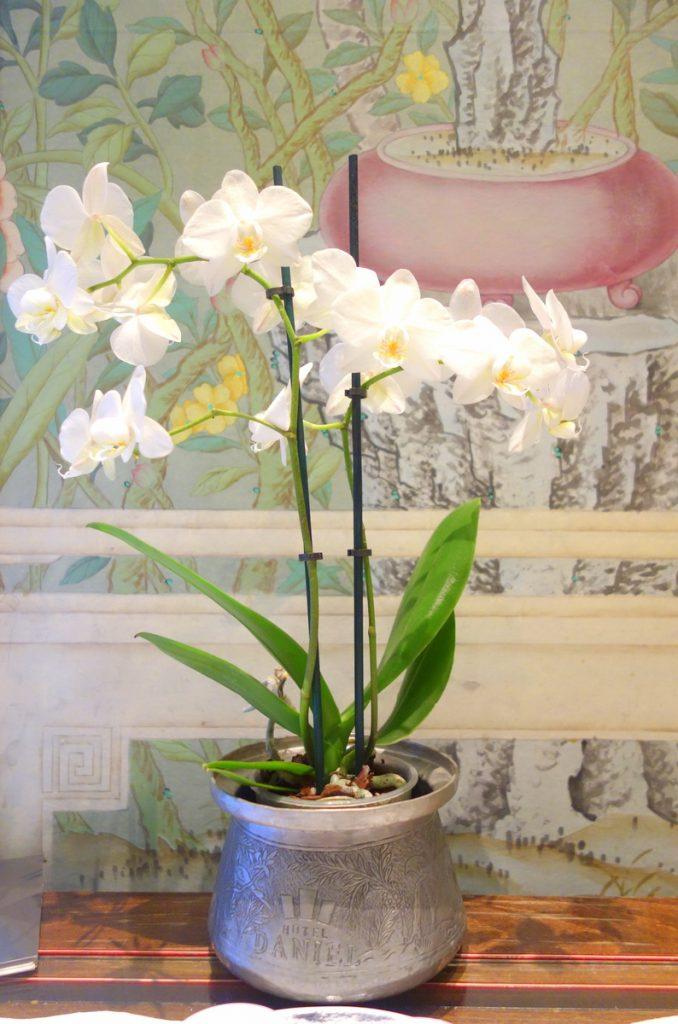 L'orchidée est la fleur du luxe en même temps que le symbole d'une beauté parfaite et absolue