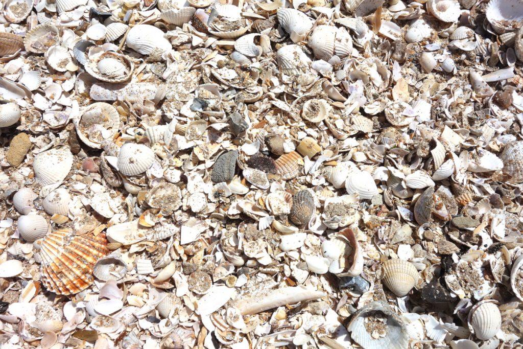 Les coquillages sur la plage d'Houlgate en Normandie