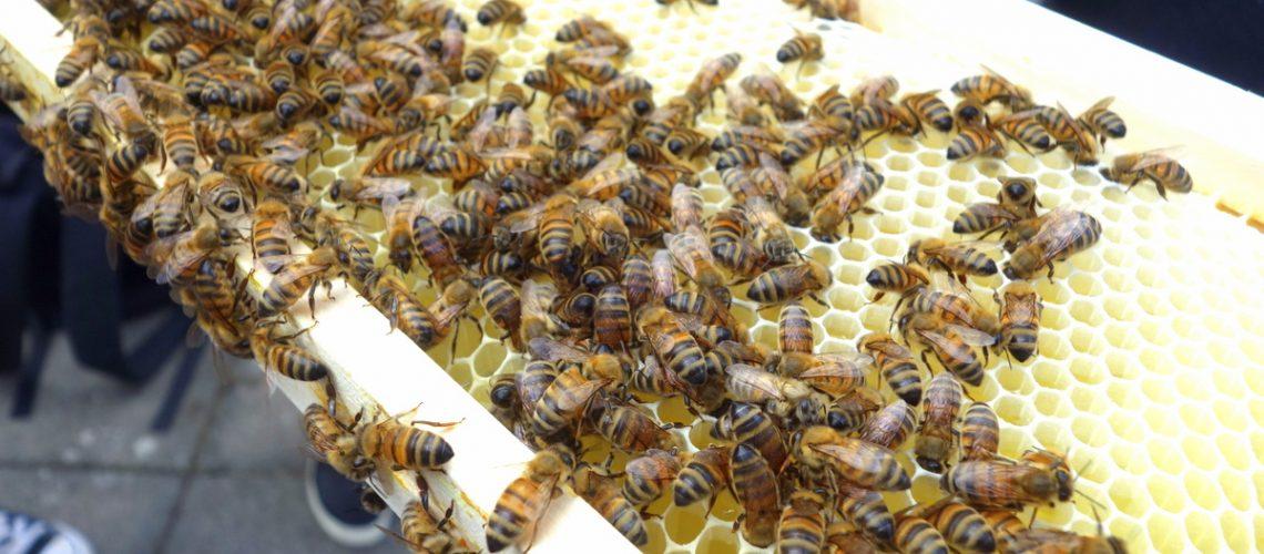 Les abeilles du Paris Marriott Champs Elysees Hotel