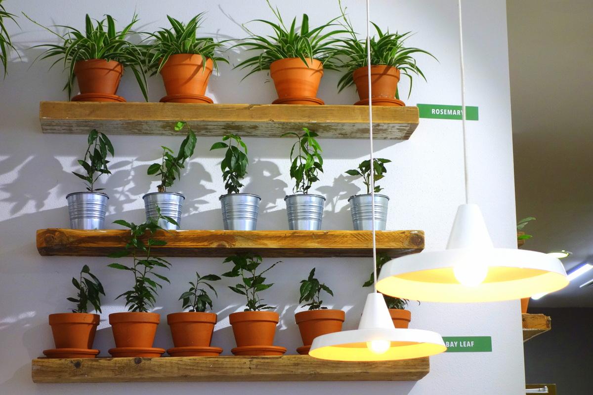 Sprout & Co, une bonne adresse à Dublin, en Irlande