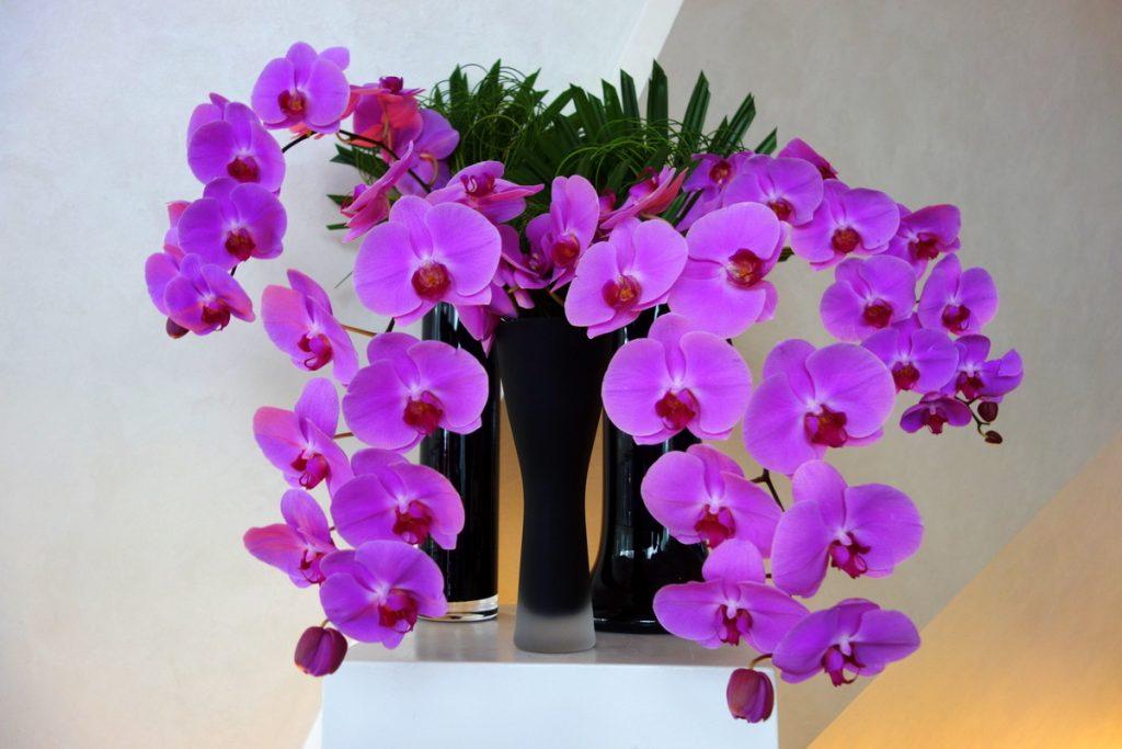 The Marker Hotel Dublin : les orchidées