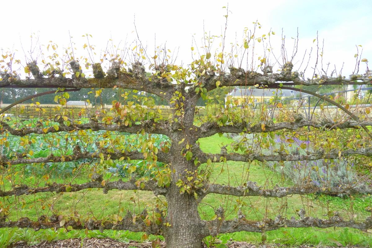 Goûts d'Yvelines : le potager du Roi à Versailles