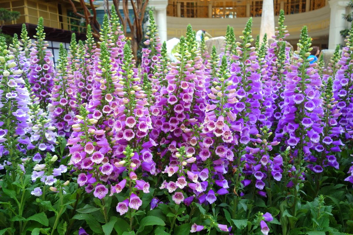 Bellagio hotel casino Las Vegas fleurs 18