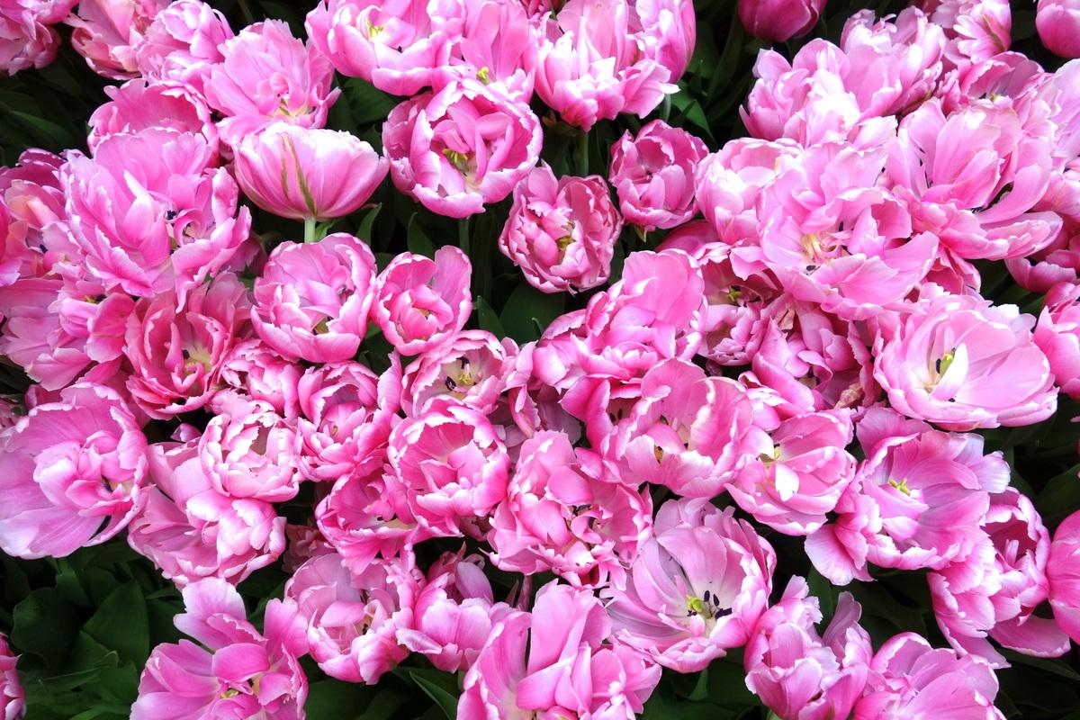 Bellagio hotel casino Las Vegas fleurs 20