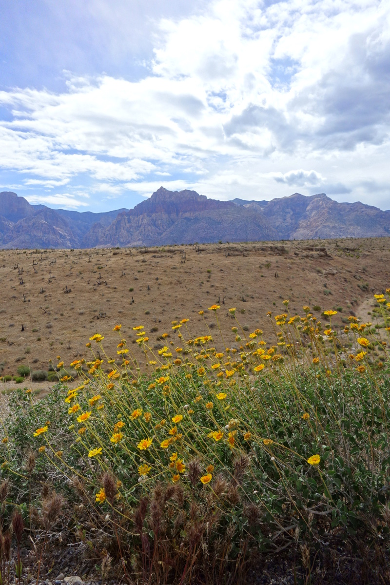Red Rock Canyon National Conservation Area - États-Unis - Le blog de Lili