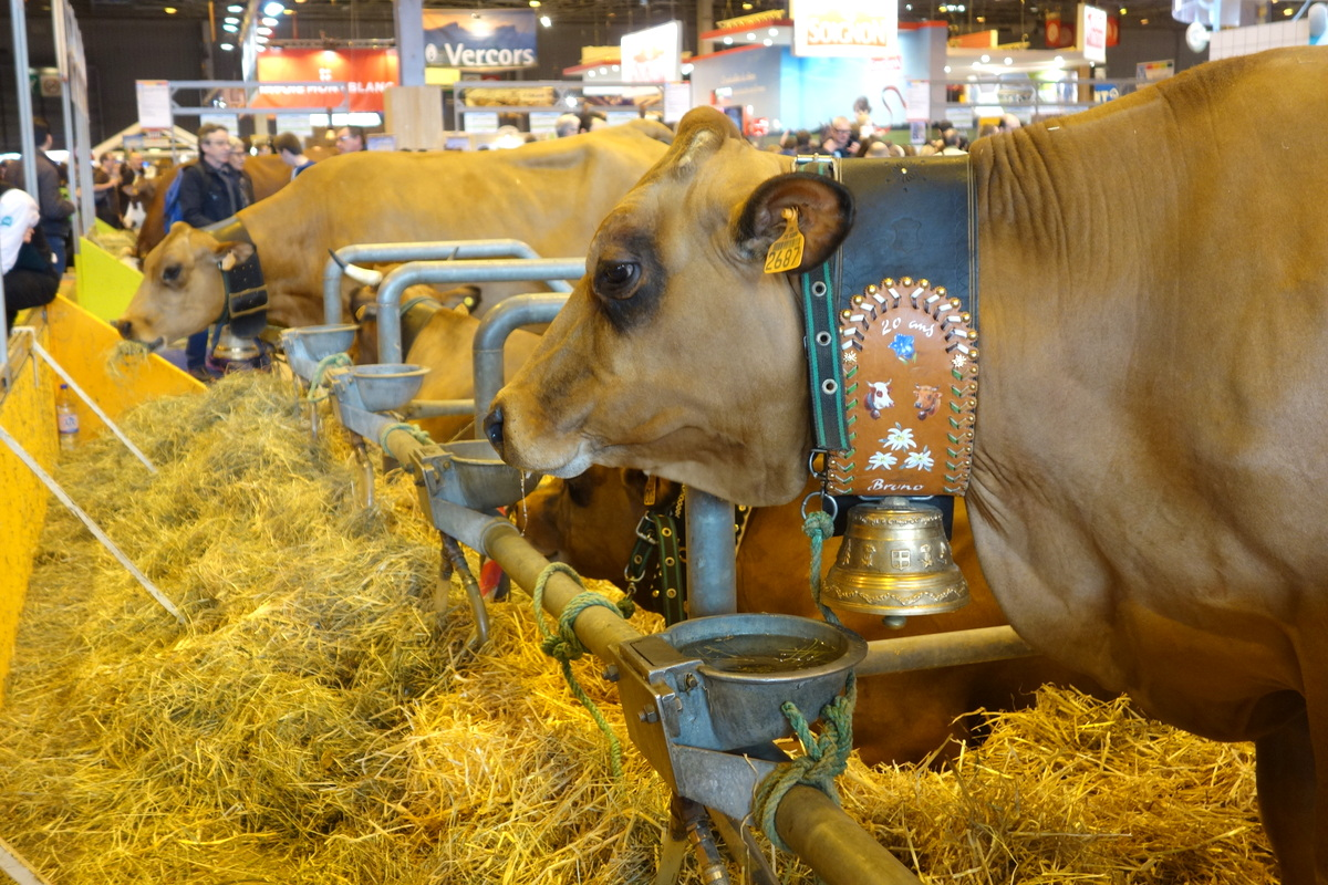 Salon de l'agriculture 2017 - Le hall des vaches
