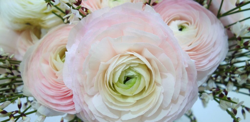 Beauty day 2017 - blog beauté - fleurs