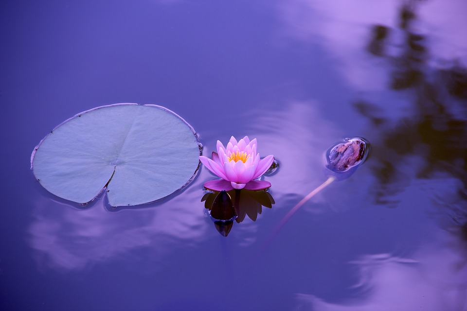 Lotus et zen - Photo Pixabay