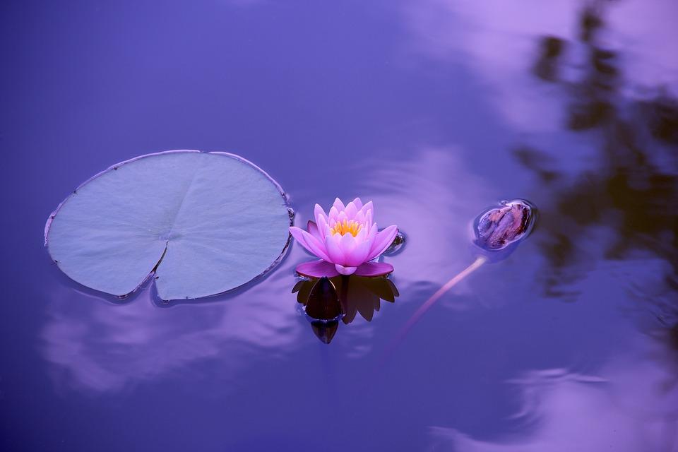 Lotus et zen - Photo Pixabay