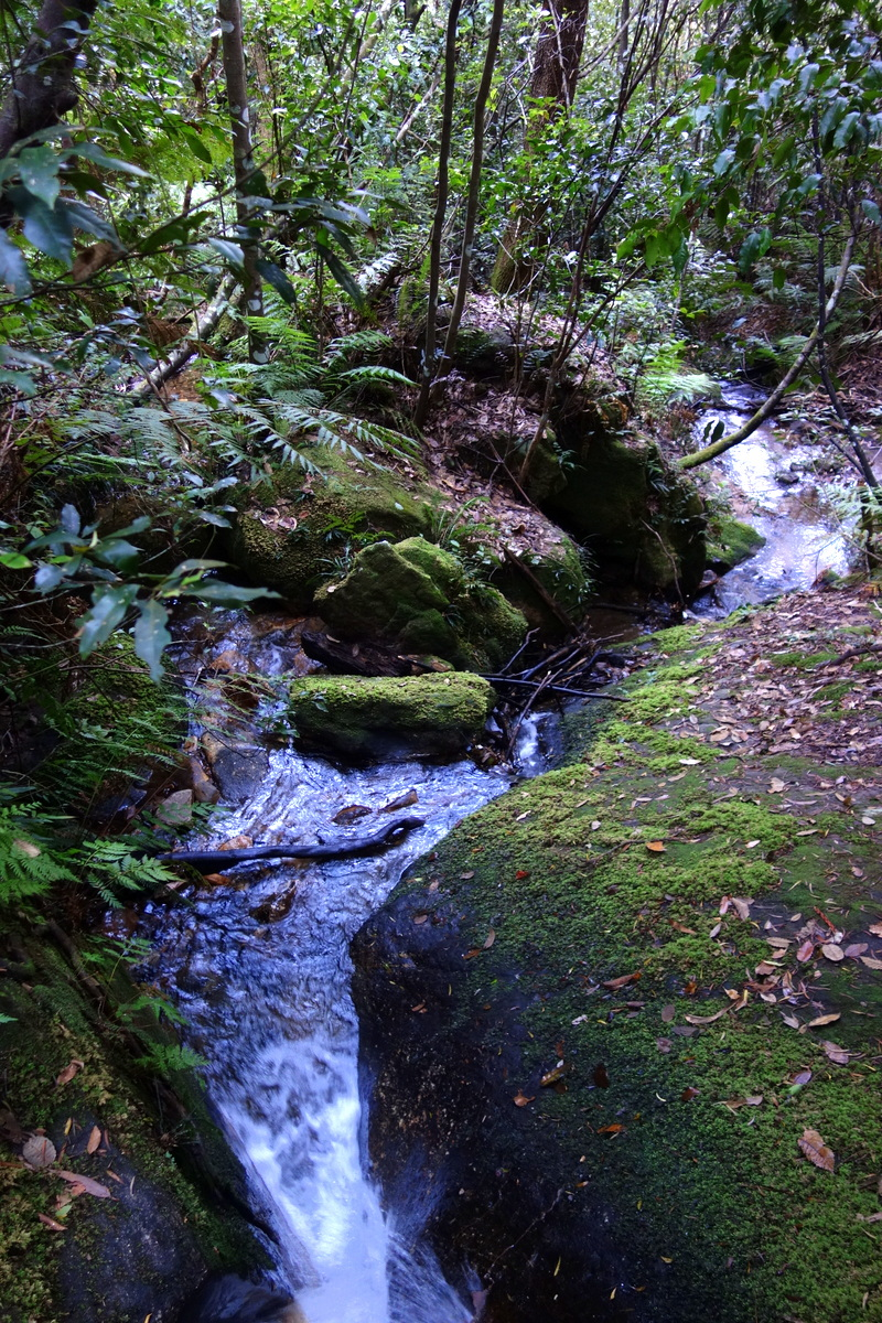 Les Blue Mountains - 5 jours à Sydney - Blog de Lili, voyage