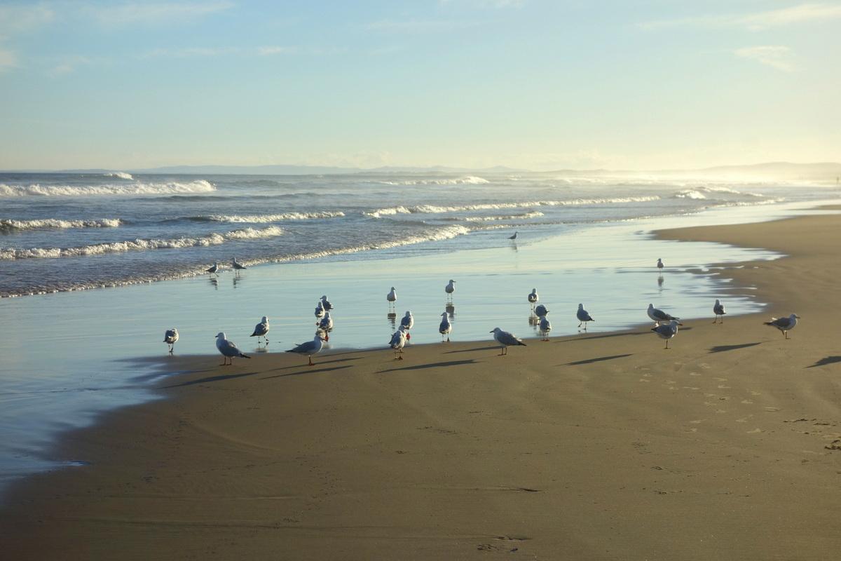 La plage de Port Stephens - Voyage en Australie