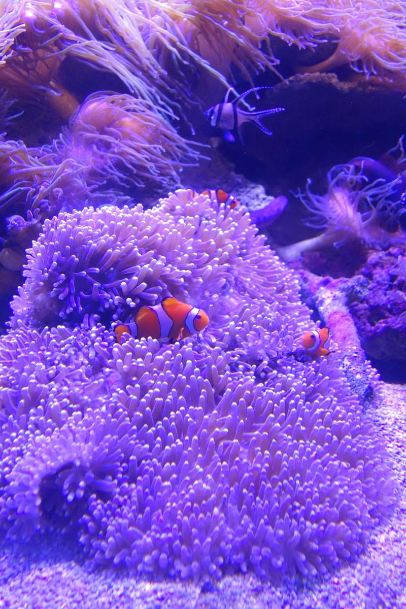Sea Life Sydney Aquarium - 5 jours à Sydney - Blog de Lili, voyage