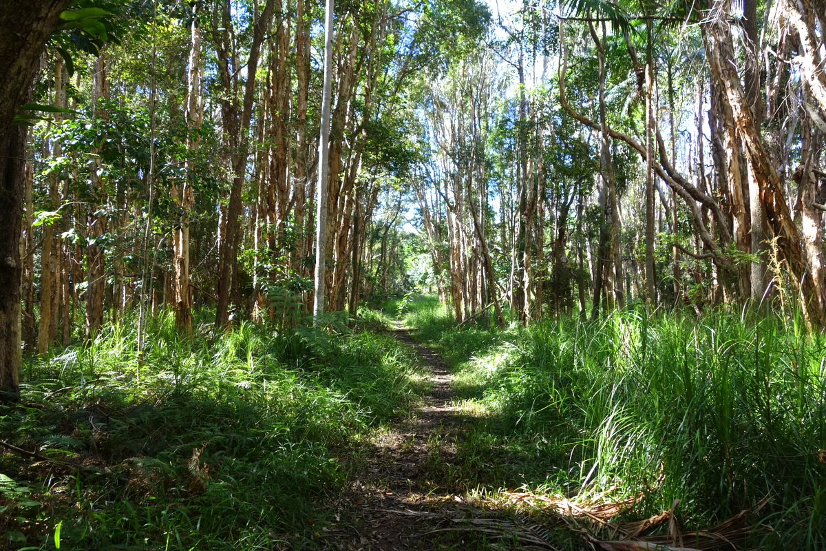 Byron Bay - Woodland Sanctuary
