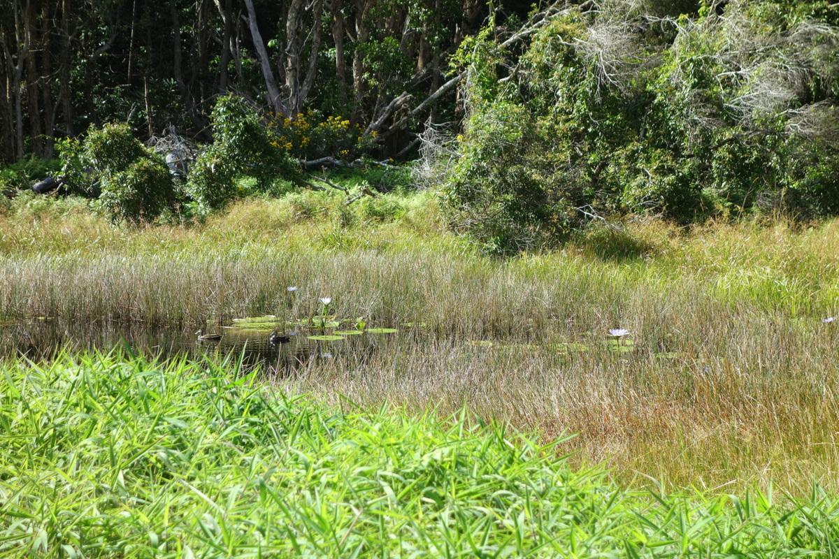 Byron Bay - Woodland Sanctuary