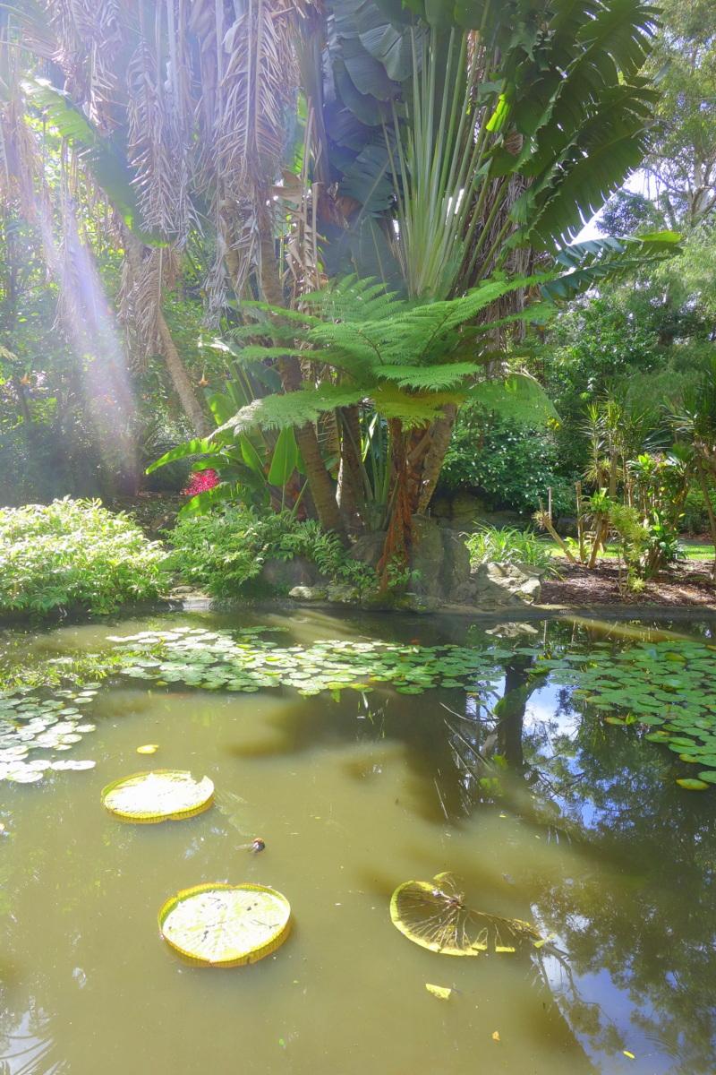 Road trip sur la côte Est australienne : Coffs Harbour - Le blog de Lili