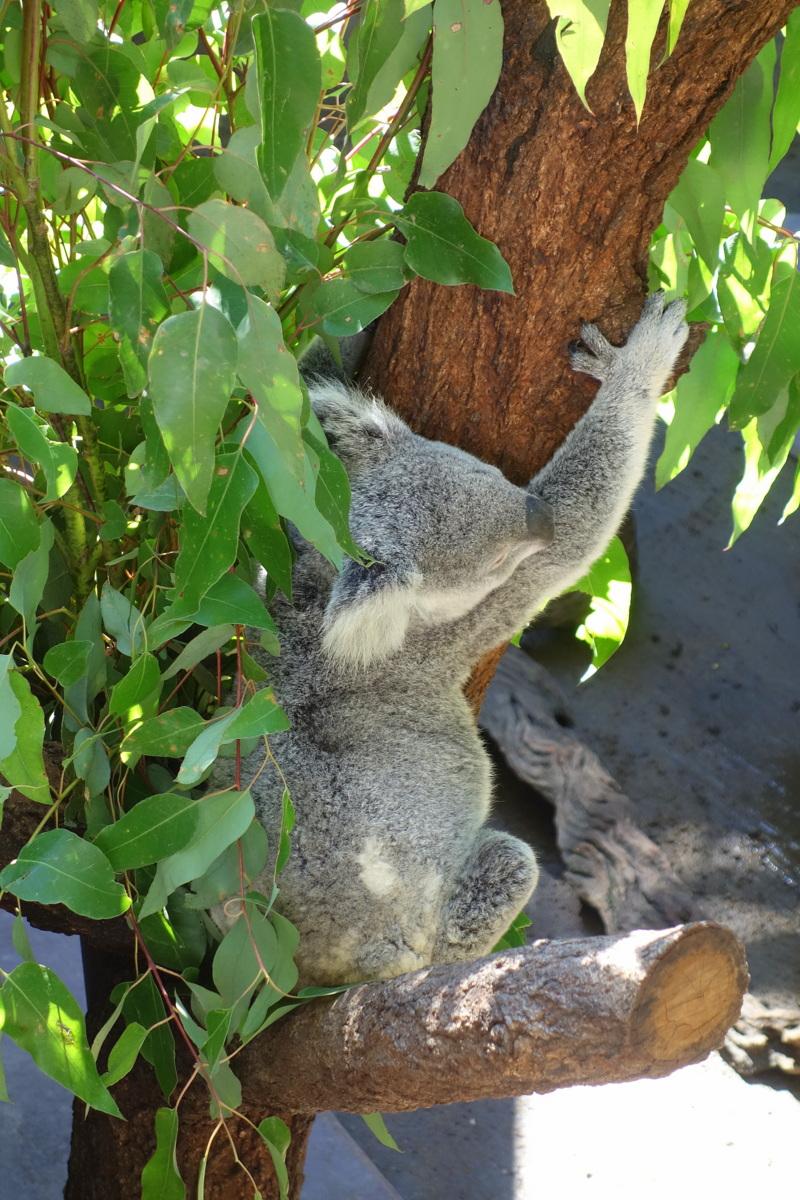 Voyage en Australie - Australia zoo - Le blog de Lili
