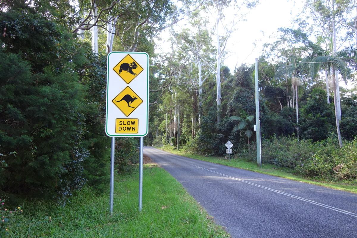 Voyage en Australie - Springbrook National Park