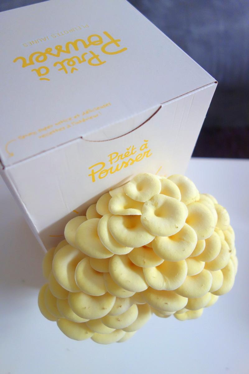 Pleurotes jaunes - Kit à champignons Prêt-à-pousser