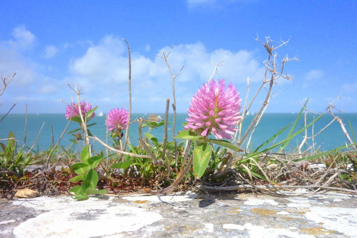 Vacances à l'île de Ré
