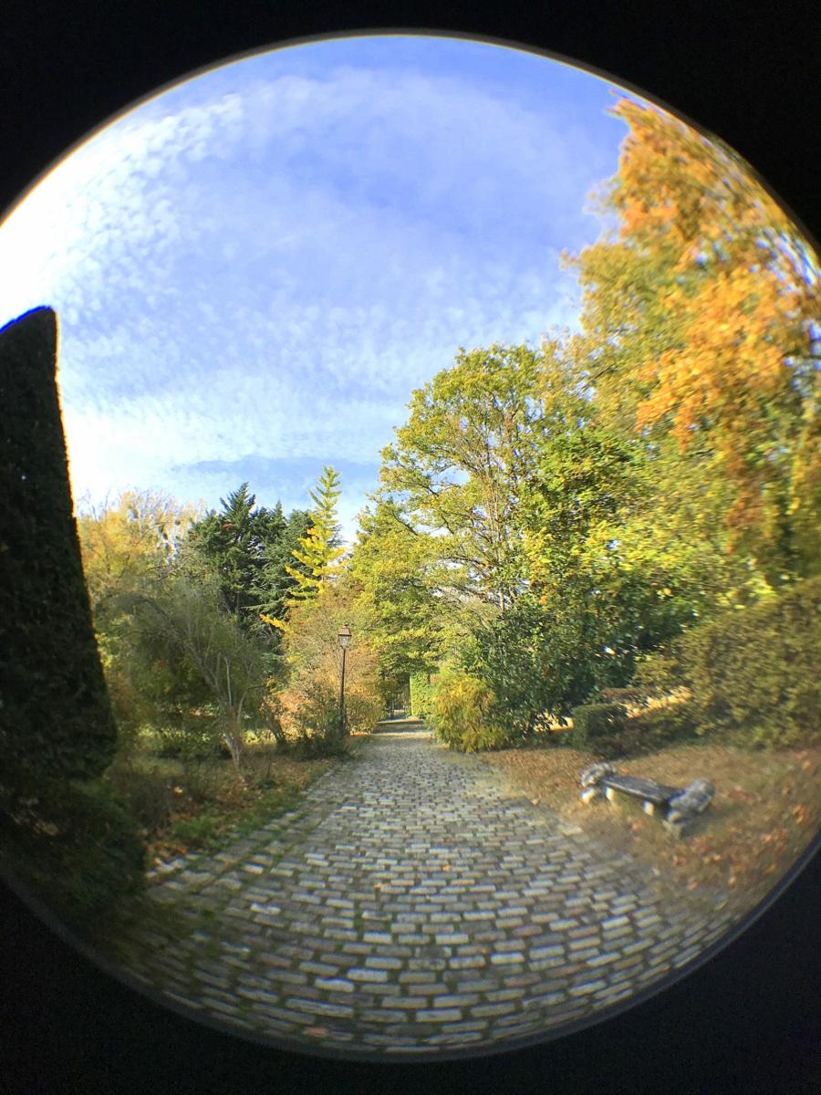 Ile verte, automne