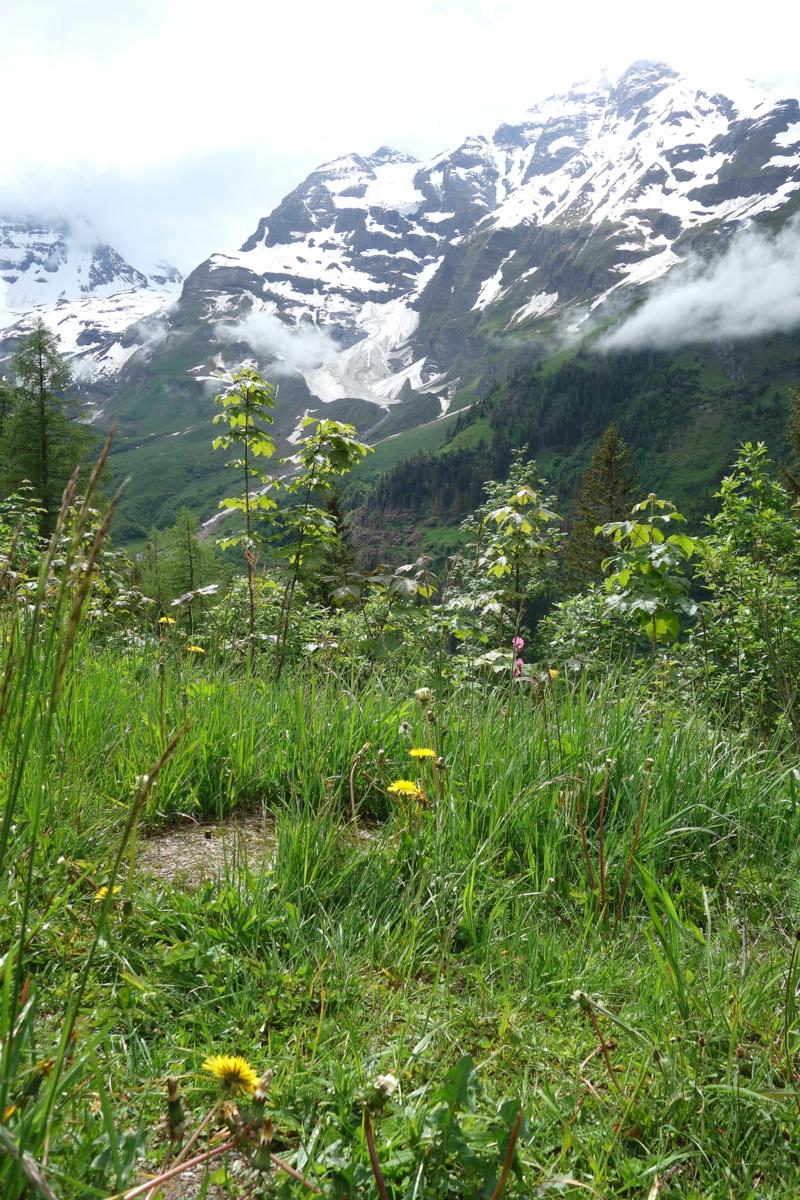 Sur la route du Grossglockner en Autriche