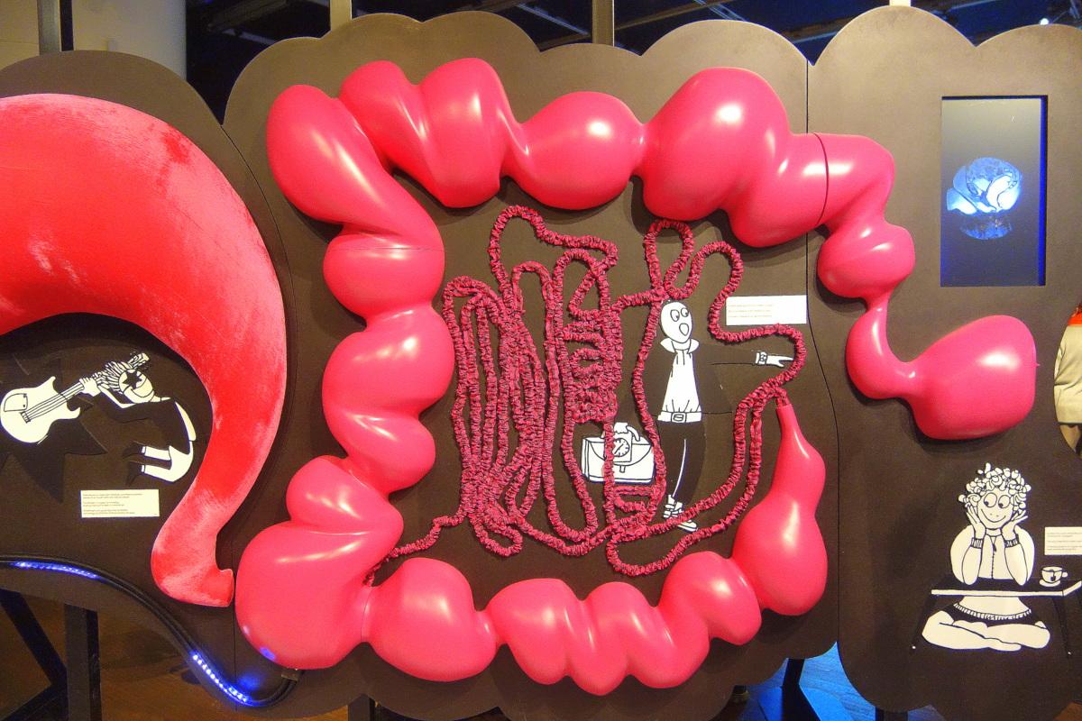 Exposition Microbiote d'après Le charme discret de l'intestin