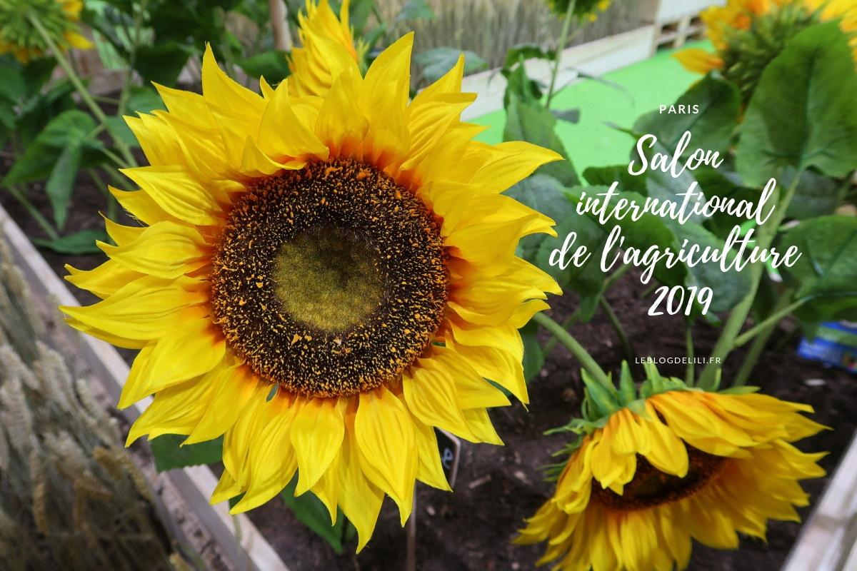 Salon international de l'agriculture 2019 - Tournesols