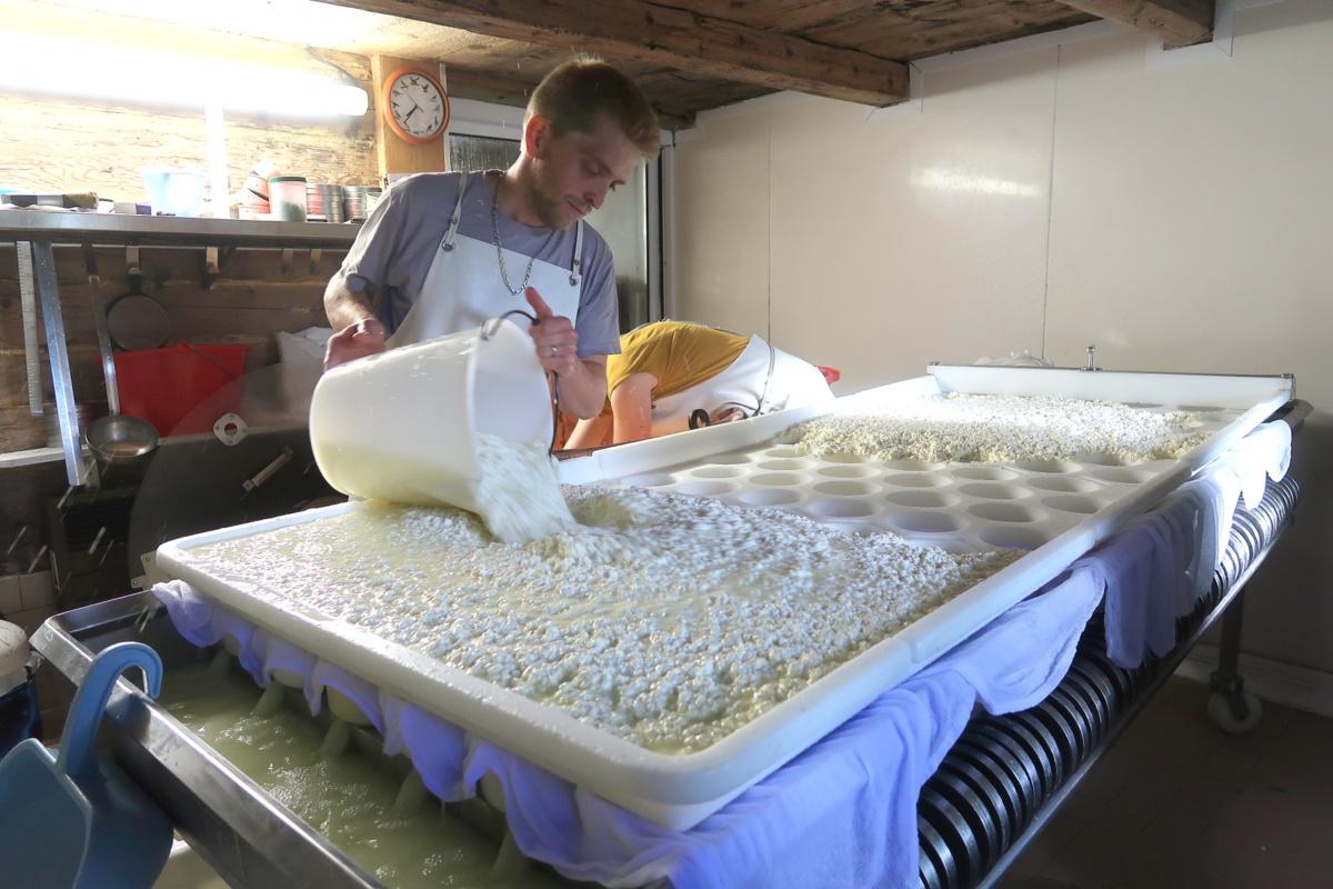 Confection de reblochon à l'alpage des Corbassières