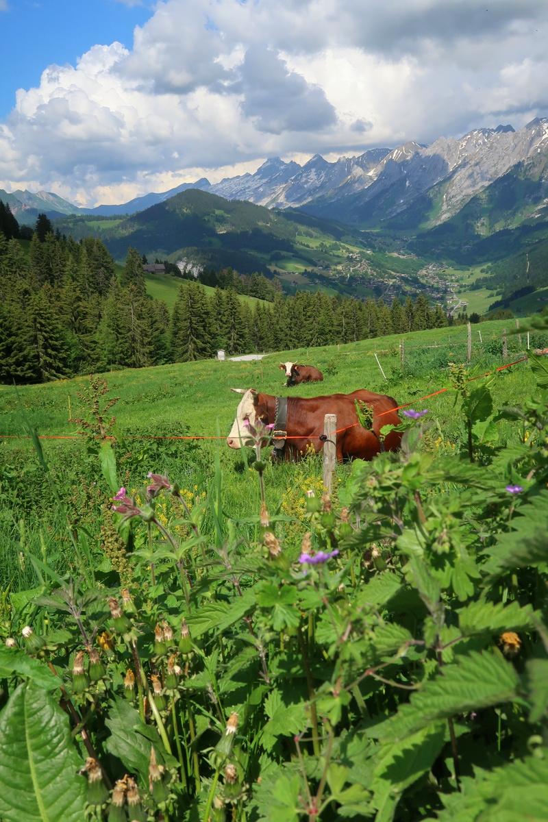 Les alpages en Haute-Savoie